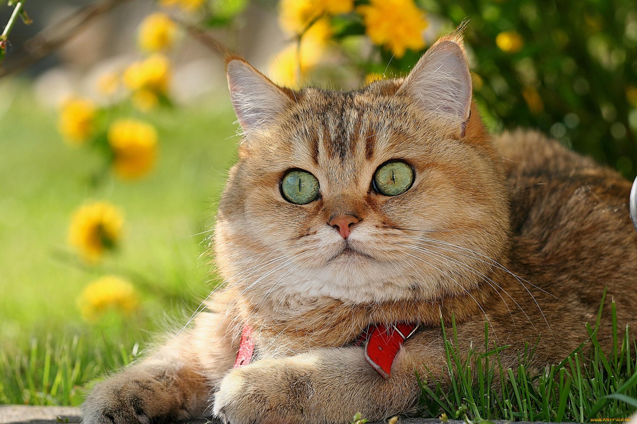 отличные картинки котов потом дима